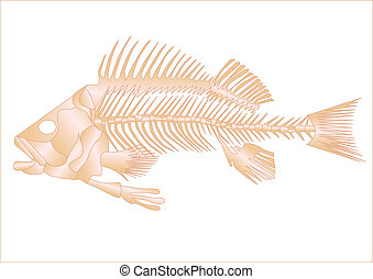 fish skeleton isolated on the white background