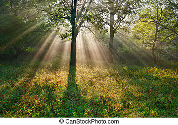 The bright sun rays shining through branches of trees, wood...