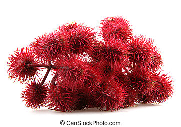 castor oil plant flowers on white background