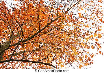 London Autum, Richmond Park - Colorful London Autumn,...