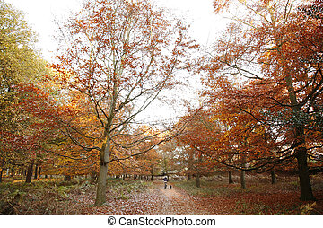 London Autum, Richmond Park - Colorful London Autumn,...