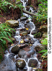 Stream in Vancouver - A stream in Capilano Suspension Bridge...