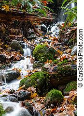 Stream in Vancouver - A stream in Capilano Suspension Bridge...