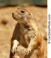 Prarie Dog Days - This Prairie Dog is chillin like a viillin