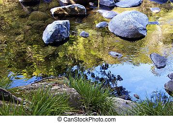 Vegetation in Mossman Gorge, Queensland, Australia
