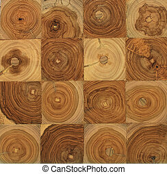 Wood Section - cross section of a tree with tree rings