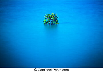 Mangrove in the southern country