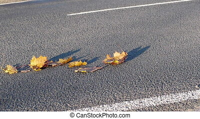 Cars driving on autumn leaves