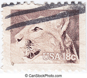 USA - CIRCA 1981 : stamp printed in USA shows Wild American...