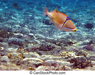 Funny tropical fish - Tropical fish and coral reef