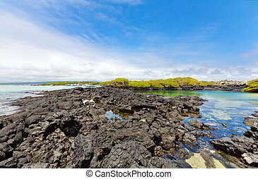 Galapagos island - Beautiful shore of the galapagos, Ecuador
