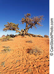 deadwood - desert tree at Monument Valley, Arizona