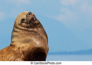 Sea Lion Portrait 1