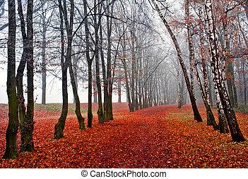 November fog in park