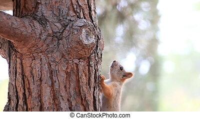 Squirrel runs along tree