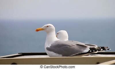 Two seagulls on the background of the sea