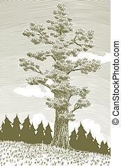 Woodcut Giant Cedar Tree - Woodcut illustration of a giant...