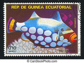 Triggerfish - EQUATORIAL GUINEA - CIRCA 1973: stamp printed...