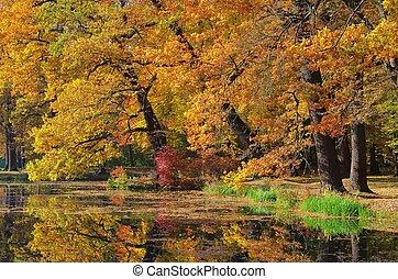 Oak tree in fall 03