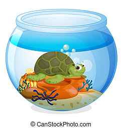a water bowl and a tortoise