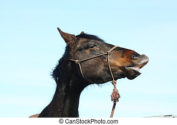 Portrait of funny brown horse - Portrait of funny dark brown...