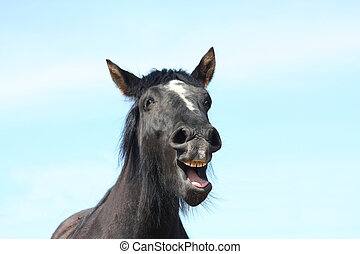 Portrait of black yawning horse - Portrait of black horse...