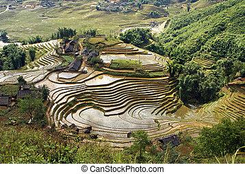Reisterrassen, Sapa, Vietnam - Rice Terraces, Sapa, Vietnam,...