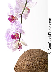 Tropic - Orchid flowers with coco nut