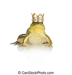 handsome prince - bull frog wearing gold crown looking at...