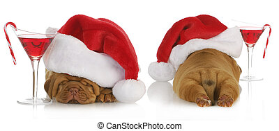 christmas puppy - santa dogue de bordeaux from the front and...