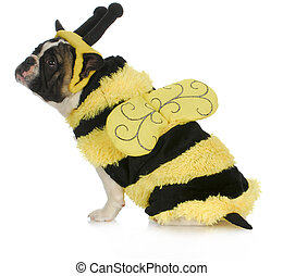 dog wearing bee costume - french bulldog dressed up like a...