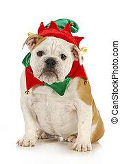 dog christmas elf