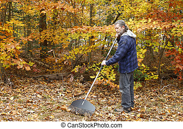A mature long gray haired man with a beard raking leaves...