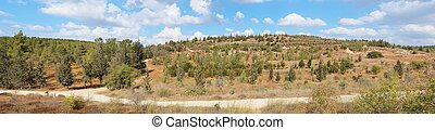 Empty hiking trail among low hills with pinetrees