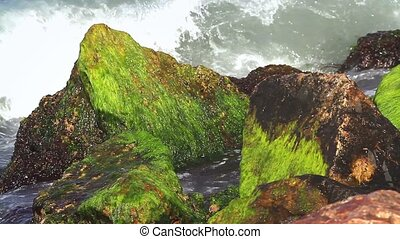 Algae and rocks - Ocean water with algae and rocks