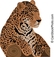 jaguar - Beautiful feline illustration. Jaguar (Panthera...