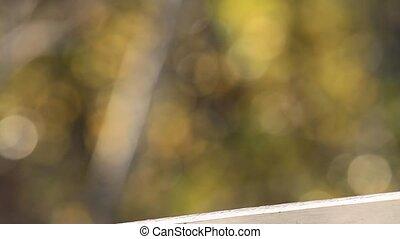 sparrow  -  sparrows, birds