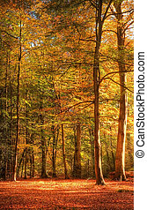Vibrant Autumn Fall forest landscape image - Beautiful...