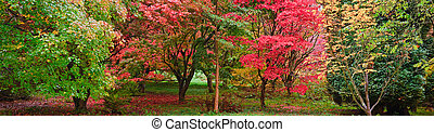 Beautiful Autumn Fall nature image landscape forest panorama