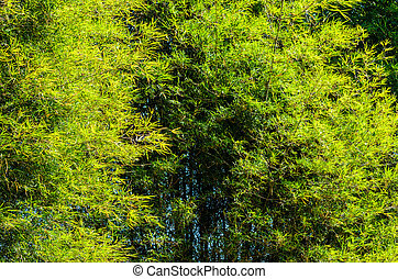 Bamboo trees in forest in the green nature