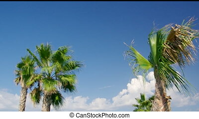 Beauty palm-trees in Antalya, Turkey.