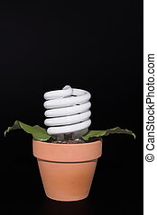 Light Bulb Potted Plant - A fluorescent light bulb growing...