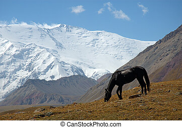 Mountain contrast 1 - Horse in the Base Camp 1, with the...