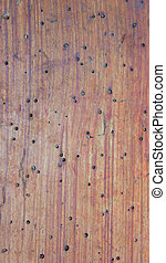 Woodworm Holes