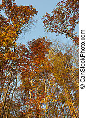 Crones of trees in autumn sunny day
