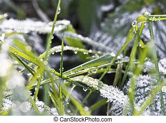 frozen green grass - Frost Covered Grass on an Autumn...