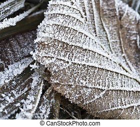 frozen Leaf - Frost Covered Leaf on Frozen Grass on an...