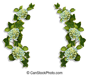 Ivy and Hydrangea borders - Hydrangea flowers and Ivy Image...
