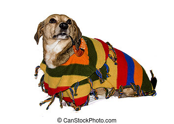 spanish dog - mexican fat dog smoking  pipe and have poncho