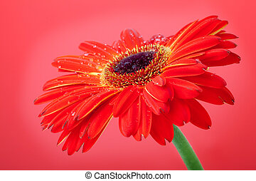 Red flower on red background